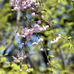 新コロナウイルスが蔓延した春