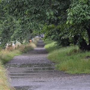 梅雨の黒目川散歩