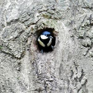 野鳥を探し回ったけど…