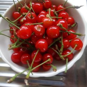 さつきの月の野菜と果物