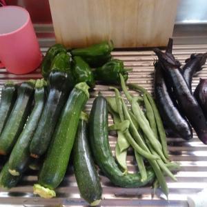 豪雨の中で出来た野菜