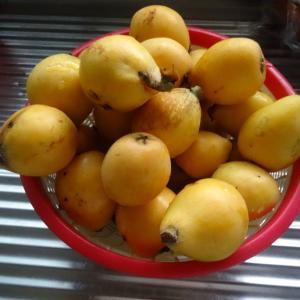 梅雨の合間に出来た野菜達と「マリーゴールド」ストロベリーブロンド