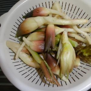 秋野菜の種の準備と夏野菜