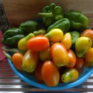 夏野菜と人並み