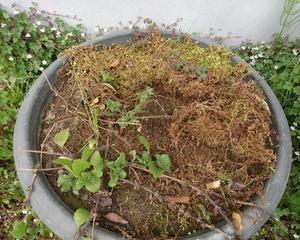 水上葉育成鉢のリセット
