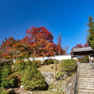 柳生芳徳禅寺の紅葉