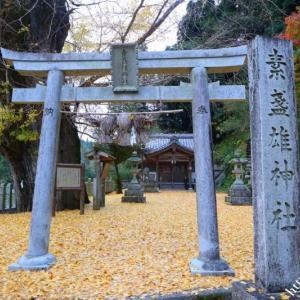 素盞雄神社の落葉絨毯(動画)