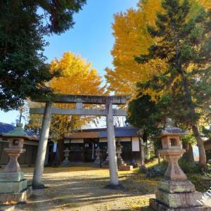 八阪神社のツイン銀杏