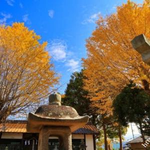 みたび八阪神社のツイン銀杏