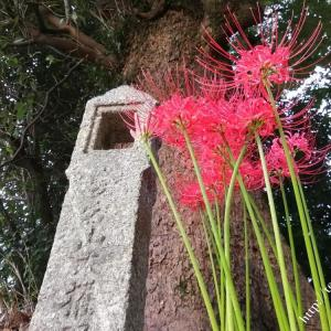 鎮守の森の彼岸花