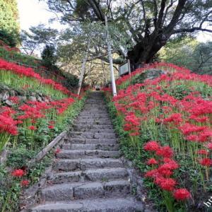 仏隆寺の彼岸花 2021