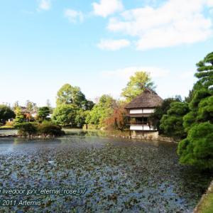 衆楽園(旧津山藩別邸庭園)風月軒 錦鯉
