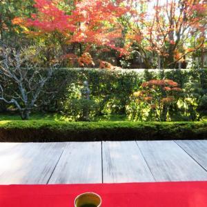 桂春院で紅葉を眺めながら お抹茶 鼓月 栗尽 19