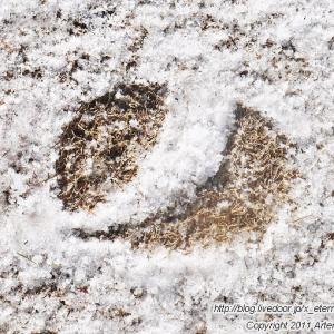雹(ひょう)が降って雪景色の西大寺緑花公園 百花プラザ