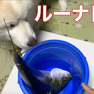 お魚とルーちゃん♪