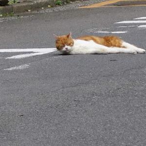 起きてるのに寝相が悪いネコ