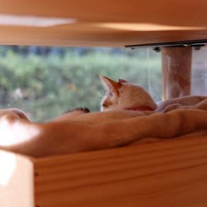 猫とワイン箱