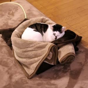 猫と寒の戻り