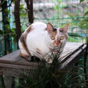 シロの猫見台