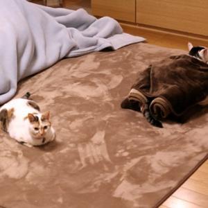 猫たちと団らん