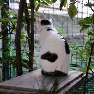 チロの猫見台