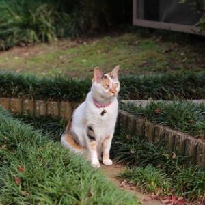 涼しい猫庭