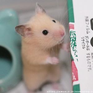 救助活動 今日はサツマイモの日 ハムスター♡サツマイモの超美味しい食べ方?