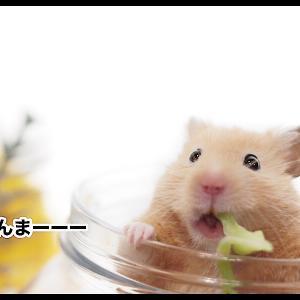 厳重に警戒|TVで紹介された食べ物とハムスター