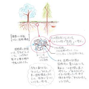 健康な地面へ 1:土の団粒構造