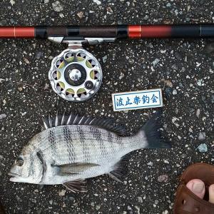 水曜日のヘチ釣り