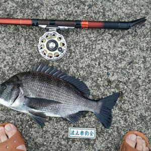 土曜日のヘチ釣り・・・ヘチっている時は人間嫌いに。