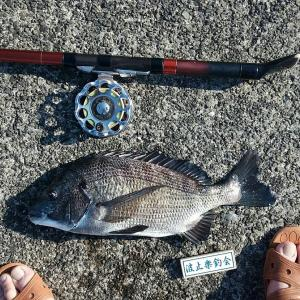 日曜日のヘチ釣り。