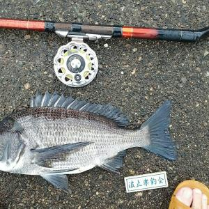 日曜日のヘチ釣り・・・新港内は抹茶オレ。