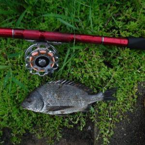 火曜日のヘチ釣り&前打ち