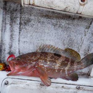 日曜日はタイラバで根魚ざんす。