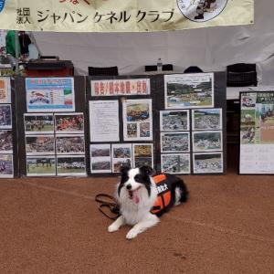 2019とちぎ動物愛護フェスティバル
