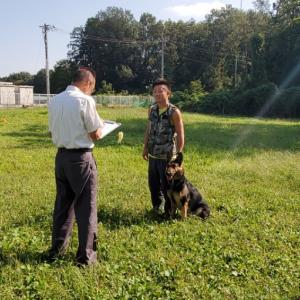 PD(日本警察犬協会) 訓練試験