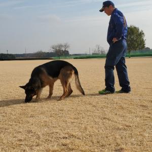 令和2年 嘱託警察犬 交付式 兼 練習会