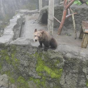 登別観光④熊牧場