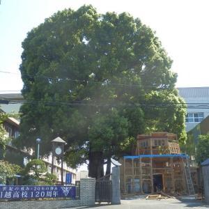 第72回 川越高校くすのき祭の後、入場門解体中