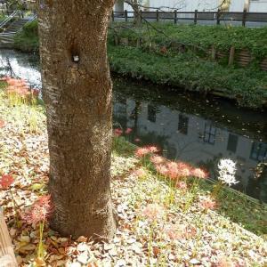 桜の木の小さな洞の小さな小さなフクロウ