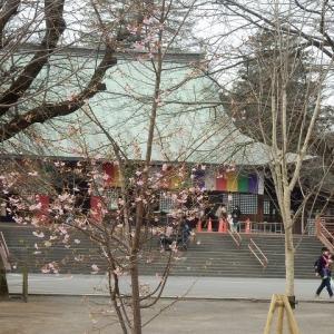 早咲きは 染井よりなほ 桜色(喜多院)