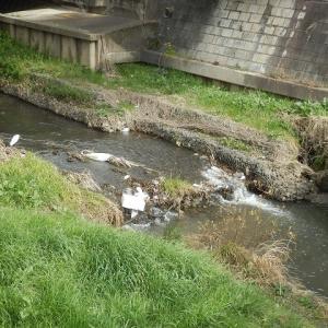台風の つめ痕深し 橋の下(琵琶橋のシラサギとカモとゴミ)