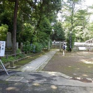 廟所への参道脇のガクアジサイ(喜多院)
