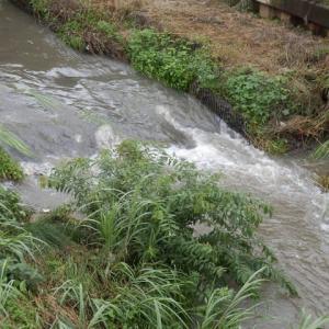 つゆの雨 水にごらせて 堰下る(新河岸)