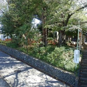 境内に 園児の声と 彼岸花(仙波氷川神社)