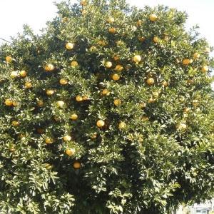 オレンジの若芽の伸びてトゲトゲし/トゲは似たれど実は異なれり