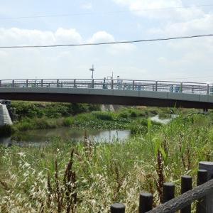 橋の上自転車降りてのアナウンス(新河岸川・畳橋)