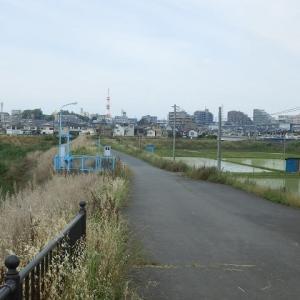 水田を見下ろす中に川越線(新扇橋)