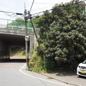 ビワたわわ橋の下にはツタ模様(国道16号から富士見橋)
